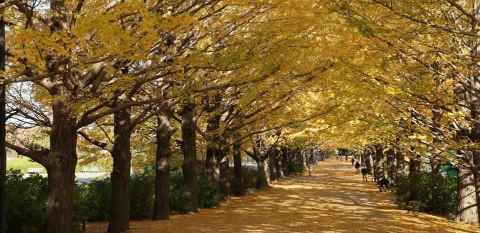 Experience Japan'sAutumn Season
